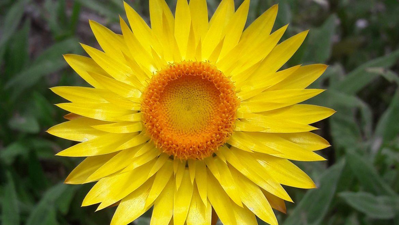 10 ways of celebrating Australian Winter solstice: Honoring Nature